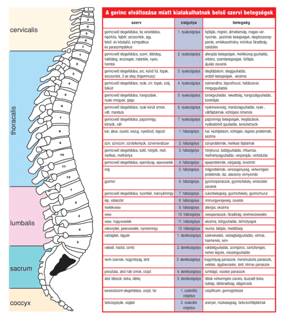 gerinc beidegzése gerincproblémák betegségek
